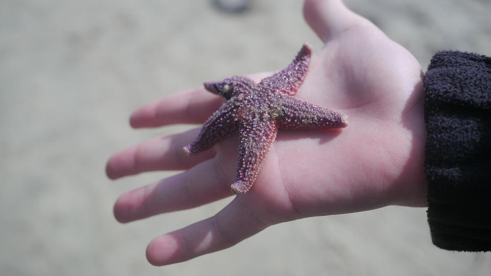 The Starfish Dilemma