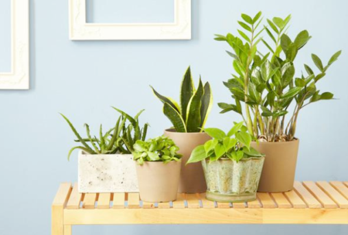 Consider Your Houseplants