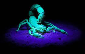 Living Like Scorpion (Killers)