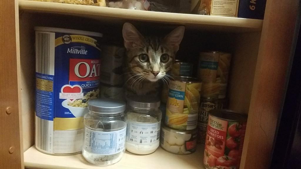 Kitten, Monotony