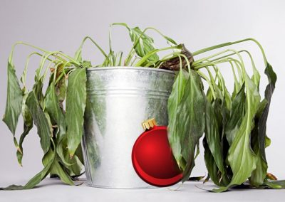 A Guide to Killing All of Your Plants, Maliciously, During the Christmas Season