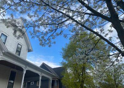 Pollen Springs Eternal
